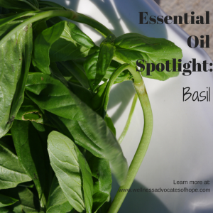 Essential Oil Spotlight-basil