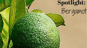 Essential Oil Spotlight: Bergamot