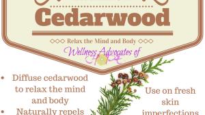 Essential Oil Spotlight: Cedarwood