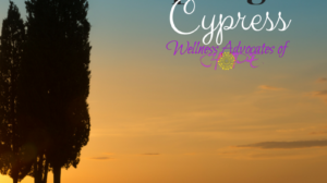 Essential Oil Spotlight: Cypress